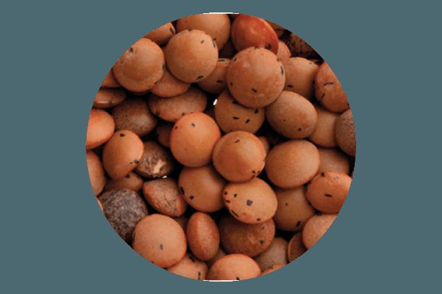 wald-natale-lenticchie-regalo